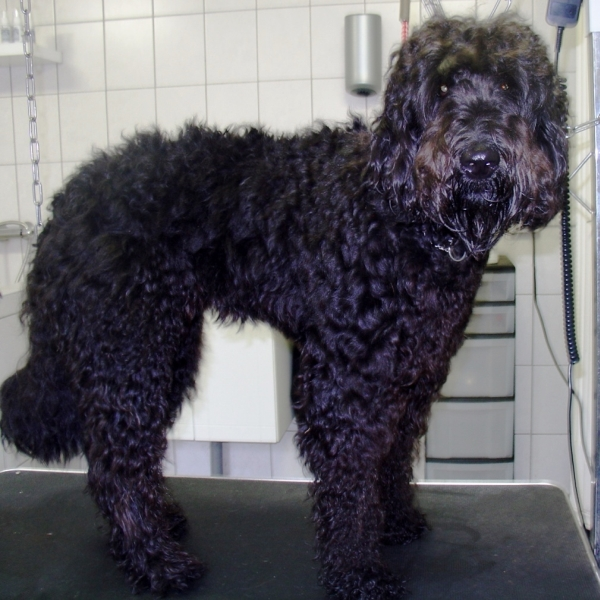 hondentrimsalon Dogs and Hounds kim voor